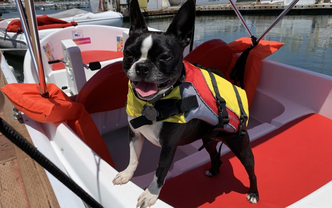 Dog in the life jacket