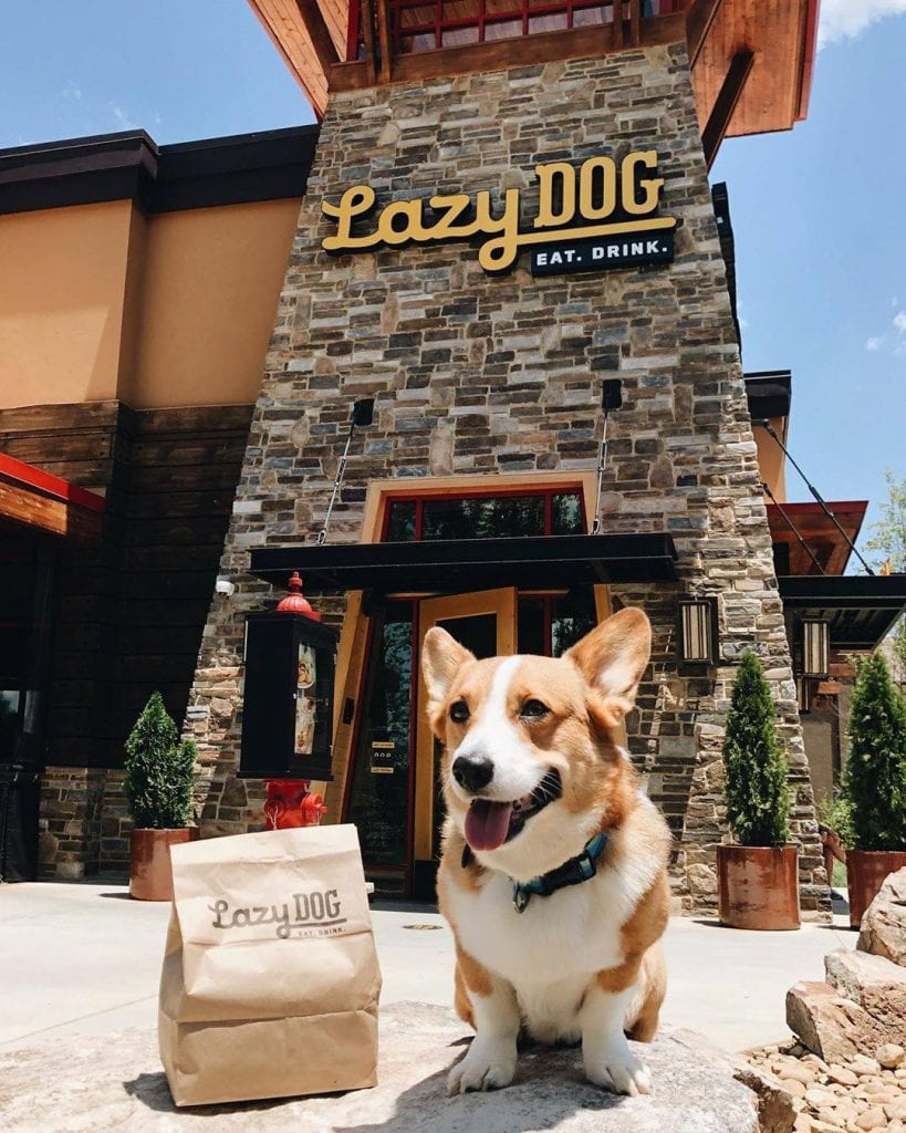 dog-friendly restaurant