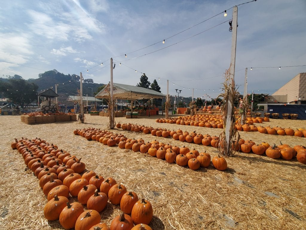 family-friendly pumpkin patch in Mission Valley